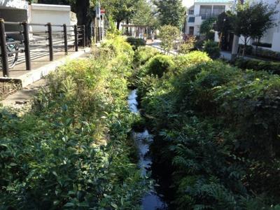代田川緑道
