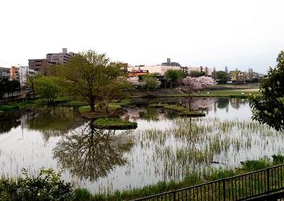 インパルス野間大池(2LDK) 野間大池公園
