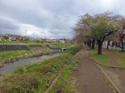河川敷は桜がきれい