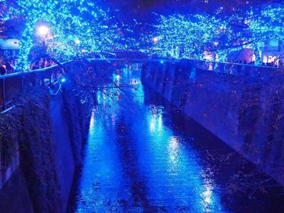目黒川の写真です。