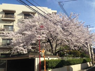 【外観】レフィナード夙川公園