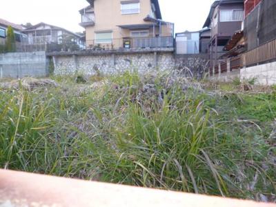 敷地内、草刈前