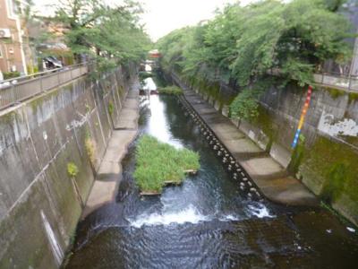 近所を流れる石神井川です。
