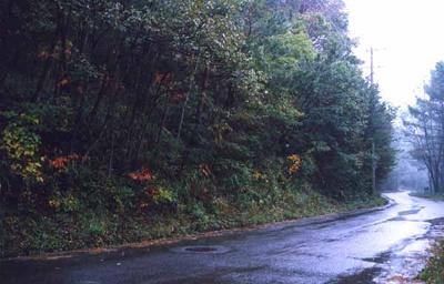 周辺に高い木があり、太陽光発電システム設置には不向きです。