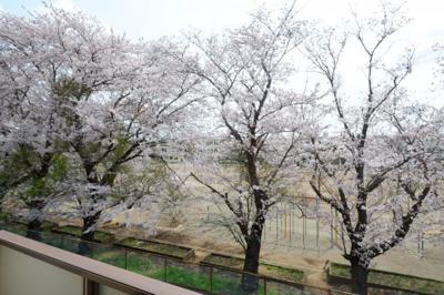 春の季節は2Fのお部屋から綺麗な桜が見えます。2019/4/7撮影