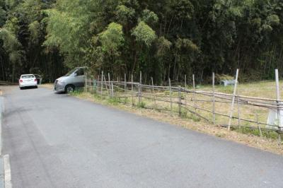 道路から、奥の竹林です