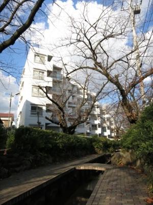 お散歩・ウォーキング等に最適な桜並木歩道です!