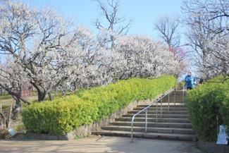 東京都世田谷区羽根木1丁目新築戸建 3号棟 羽根木公園です。広い公園で、お子様ものびのびと遊ぶことができます。
