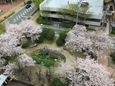 隣接する両度公園の桜を部屋から眺めることができます