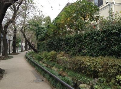 水と緑と自然豊かな代田川緑道