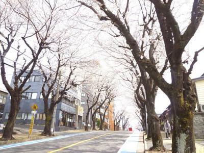 駅をおりたら桜並木を通って徒歩6分!