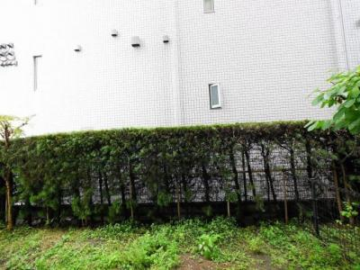 テラスから専用庭まで距離があり採光・通風共に良好
