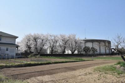 春には敷地内から桜も見られます!