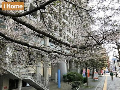 春には桜が咲くのでとても綺麗ですよ!
