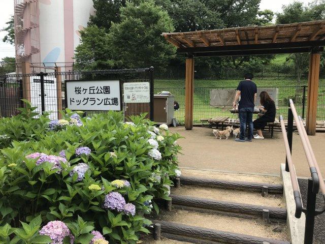 近隣ドッグラン有り【コートビレッジ桜ヶ丘PartIIレジデンス】