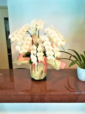 ロビーカウンターは優雅なお花がお出迎えします。