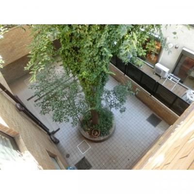 HOF伊達坂の中庭