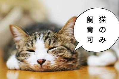 猫のみ飼育可能です。