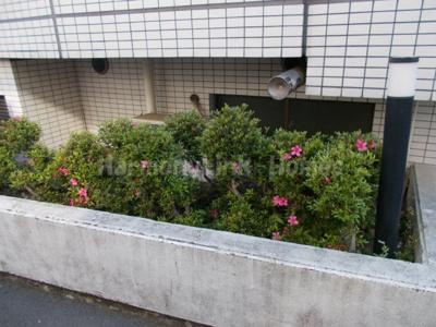 ペガサスマンション十条の花壇