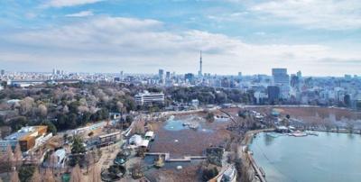 不忍池、上野公園、スカイツリーが一望です