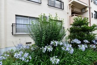 マンション敷地内は緑豊かです。