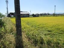51112 羽島郡笠松町門間土地の画像