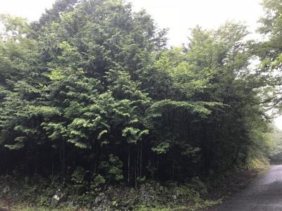 芙蓉の森林地区写真