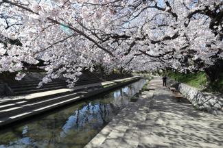 2020年3月24日 15:00頃に物件の近くを通っている元荒川にて撮影。桜の名所になっています。