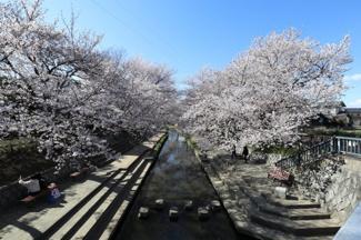 2020年3月24日 15:00頃に物件の近くにある「桜橋」から撮影。毎年近くでお花見が楽しめるのが魅力ですね。