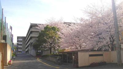 佐井寺中学校★