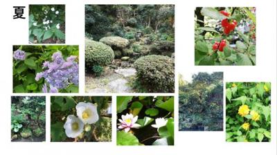 夏:睡蓮、芙蓉、紫陽花、ウツギ等の花に加え庭の緑が鮮やか。