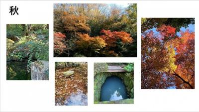 秋:紅葉は少し遅めです。萩の花が可憐に咲きます。