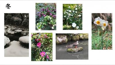 冬:花は山茶花、椿、クリスマスローズや水仙、カモの来訪も。
