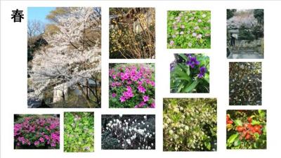 春:桜、山茱萸、モクレン、沈丁花、ツツジ、蓮華等百花繚乱。