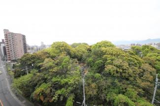 マンションの向かいには大きなお寺があって、境内の緑がきれい。