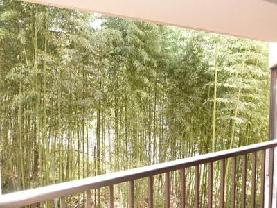 竹が良い具合にアクセントになってます。 明るい陽ざしで、お洗濯ものもよく乾きそうです! 現地からの眺望(2020年10月13日11:00頃)