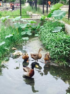 市場池公園はバードウォッチングできる公園としても有名です。いろいろな野鳥が訪れるので景色を眺めているだけでも生命を感じることのできる公園です。