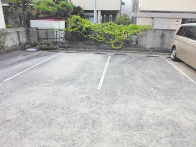 【駐車場】コニファー