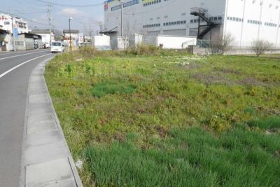 【前面道路含む現地写真】津山市河辺 事業用地268坪