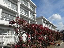 松山市立鴨川中学校 1033m