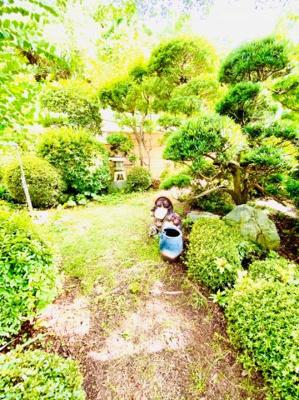 緑豊かな庭です。