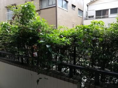 1階住戸ですが、植栽があり、プライバシーが守られております。