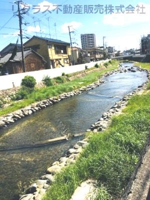 石井川が目の前に流れています