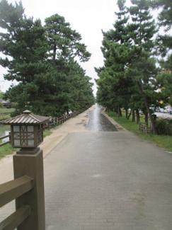 松林の細道・・散歩コースに如何でしょうか   散歩コースに如何でしょうか
