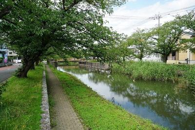 用水路の桜並木(5月撮影)