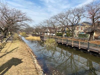 桜並木まで徒歩約2分!春にはお花見が楽しめます!
