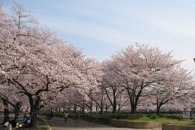 毛馬桜之宮公園まで徒歩8分です
