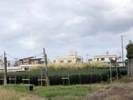 沖縄市字登川(382.57坪)の画像