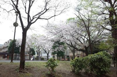 目の前十日市場公園、春は桜が見事です