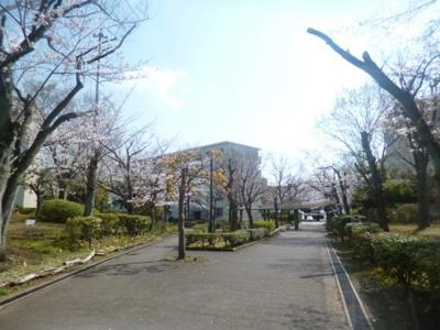 敷地内の遊歩道を撮影。桜がきれいに咲いておりました。(3月26日撮影)広い敷地も魅力のひとつです。